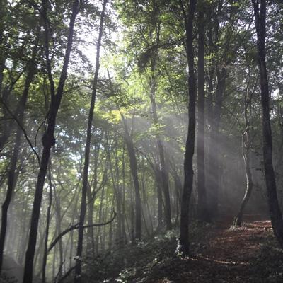 Coucher de soleil dans la forêt jurassiennne